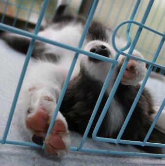仰向けで寝る子犬