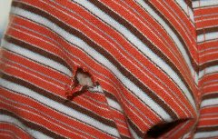 ボーダーコリーに破られた服
