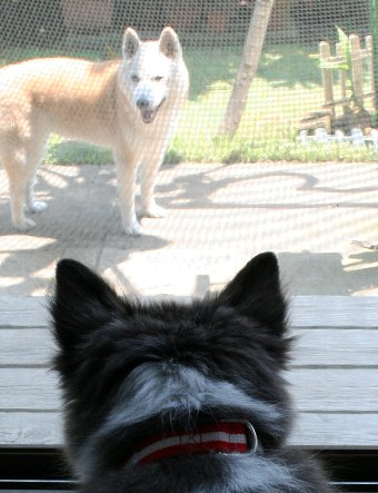 シニア犬と子犬