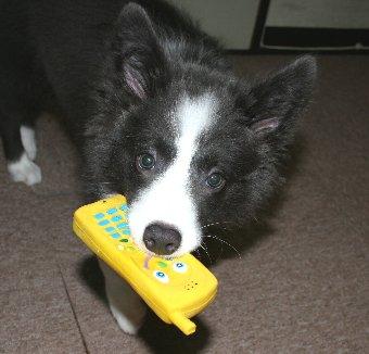 お気に入りのおもちゃと子犬