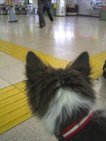 駅を体験中の子犬