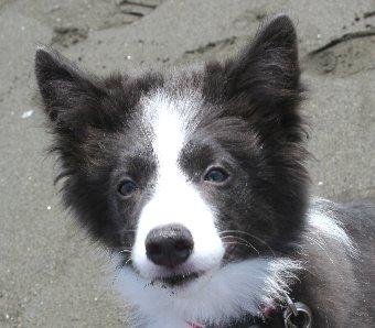 口の周りに砂がついた子犬