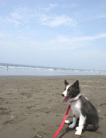 初めて海に来た子犬