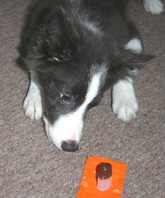 目薬と子犬