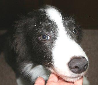 朝一番に会った時の子犬の顔