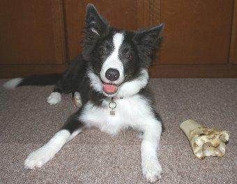 初めてもらうおやつと記念撮影する犬