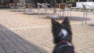 初めてショッピングモールに連れて来られた犬