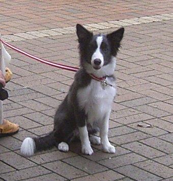 初めてのショッピングモールに緊張気味の子犬