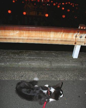 盆踊り大会を見学する子犬