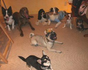 犬たちの記念撮影