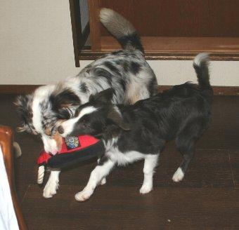 おもちゃで遊ぶ犬たち
