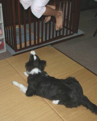 子犬の前でジャンプする子供