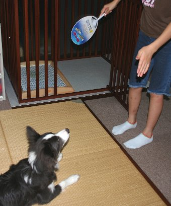子犬のマテの練習
