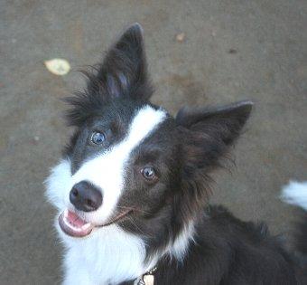 公園でロングリードに付け替えてもらうのを待つ犬