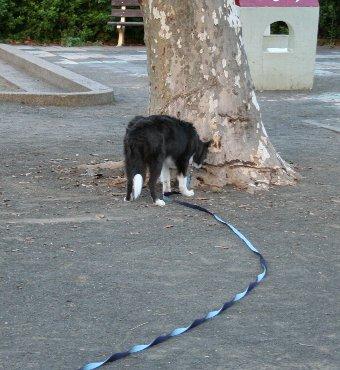 ロングリードで公園を楽しむ犬