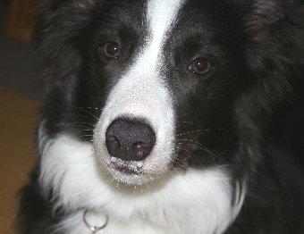 鼻水をたらす犬