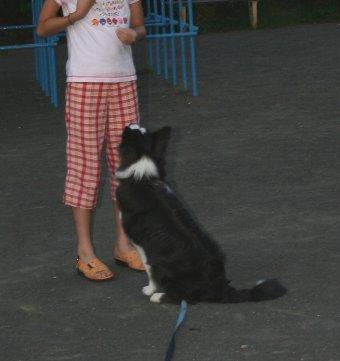 子供とComeの練習をする犬