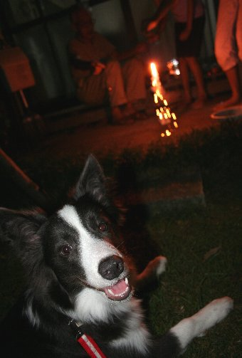 初めて花火を見る犬