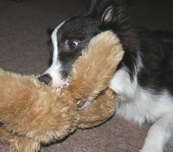 ぬいぐるみで遊ぶ犬