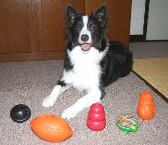 新しいおもちゃを買ってもらった犬