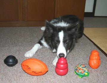おもちゃの前で待たされる犬