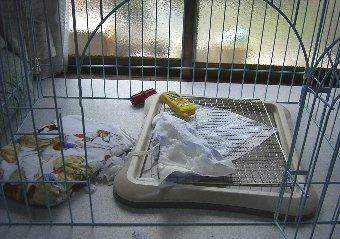 子犬がトイレシートをぐちゃぐちゃにした後