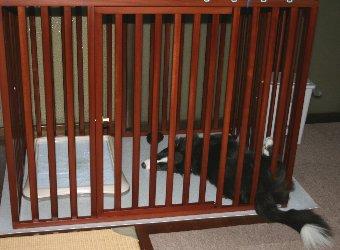 サークル内で寝る犬
