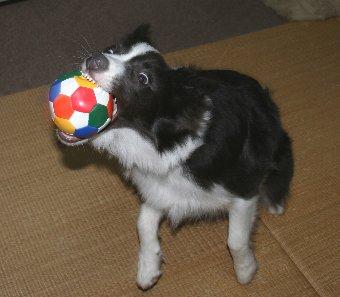 ボールをキャッチする犬