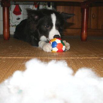 とことん綿を出す犬