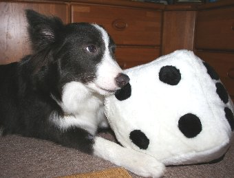 新しいオモチャを破壊する犬