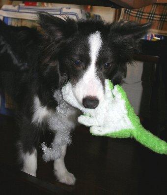 オモチャを持って逃げる犬