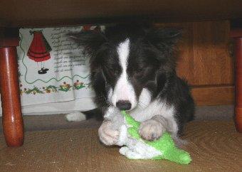 机の下に逃げ込む犬