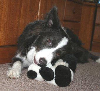 パンダのぬいぐるみを噛む犬