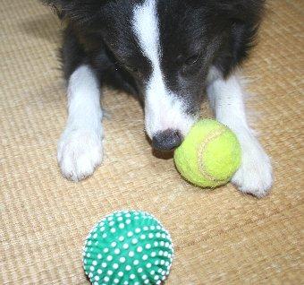 2つのボールで遊ぶ犬