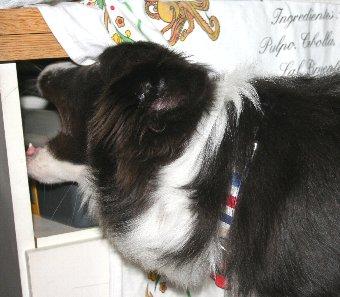 新しいオモチャを見つけた犬