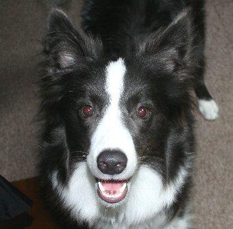 叱られた直後の子犬の顔