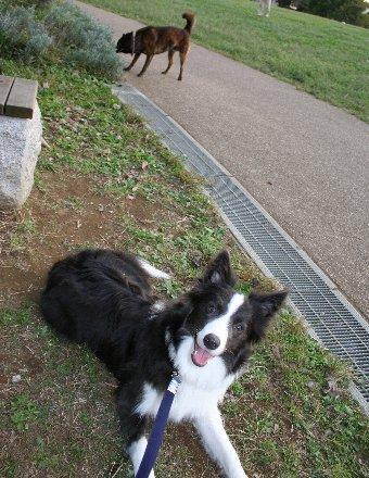 公園でも待てが出来た犬