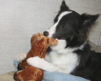 馬のぬいぐるみと遊ぶ犬