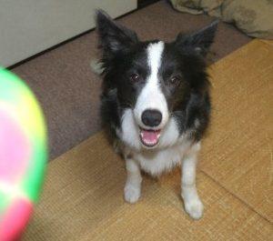 遊ぶ気満々な犬