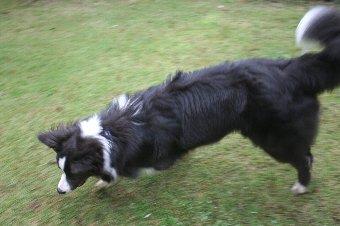 庭遊びをする犬