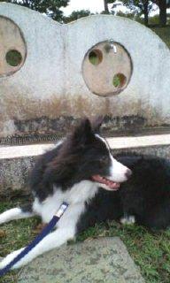 公園の水飲み場を怖がる犬