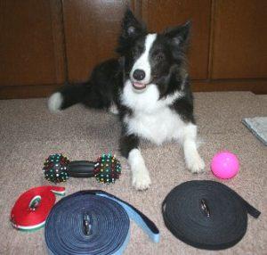 犬用ロングリードの種類