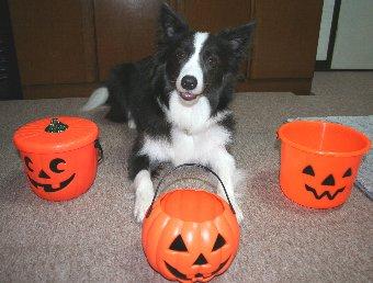 ハロウィンのカボチャと犬