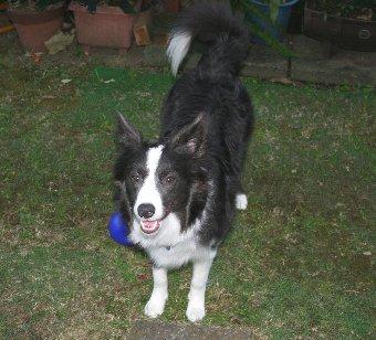 庭で遊ぶのが好きな犬