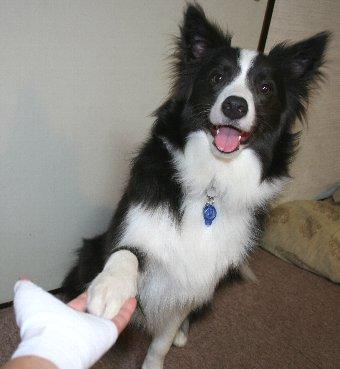 ケガした飼い主の手にお手をする犬