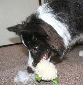 オモチャを破壊する犬