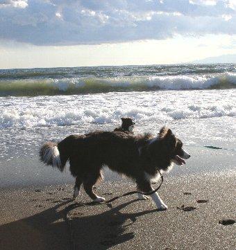 波が怖くてなかなか近付かない犬