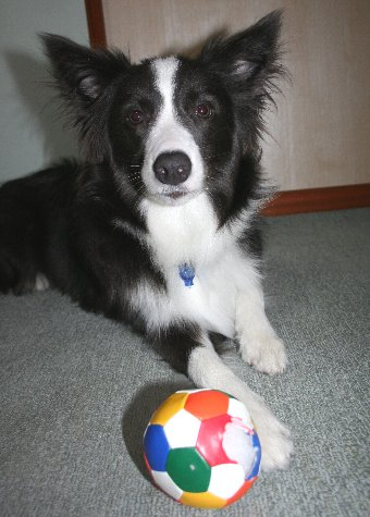 100均のボールと犬