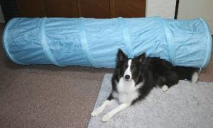 子供用のトンネルと犬