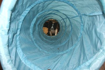 トンネルの向こう側で待つ犬